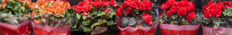 Bolsas para plantas
